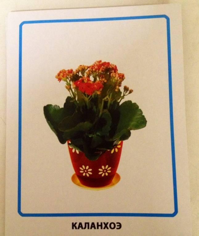 Комнатные растения открытки, смешных